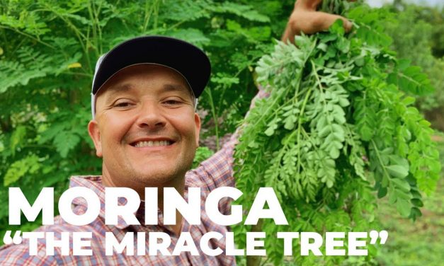 The world's most nutritious terrestrial plant?