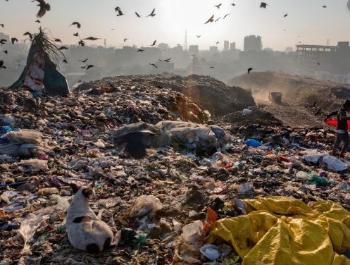 Plastic everywhere – including in you
