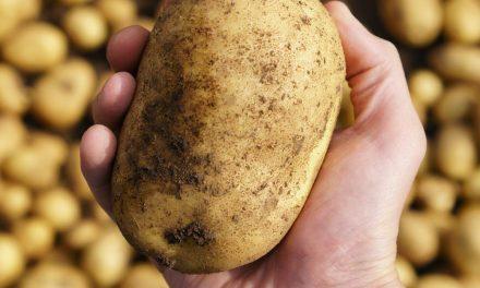 Sweet potatoes is packed full of vitamins